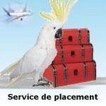 service de placement