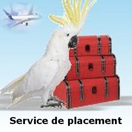 service-de-placement1