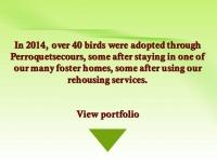 adoptions 2014 e