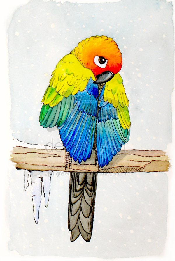 Cold_Parrot_by_greencheek
